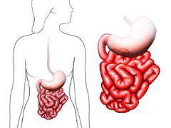 Что происходит с кишечником при хроническом энтерите